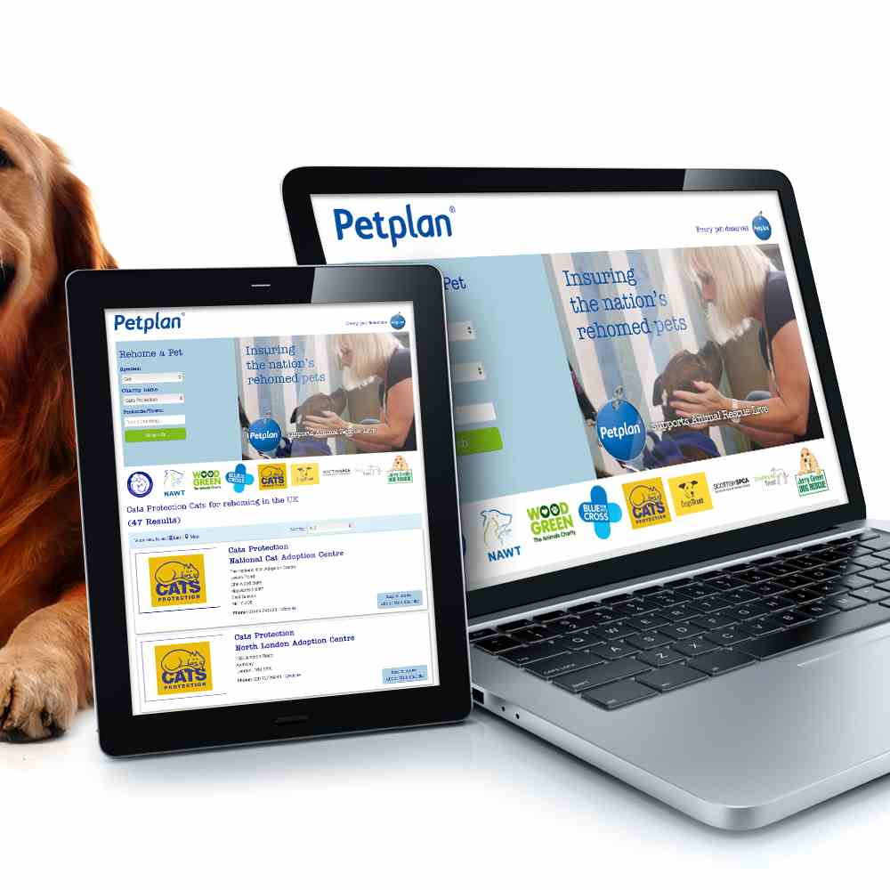Petplan Rehome A Pet Image Gallery 1
